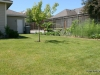 Immaculately maintained yard with fruit trees and garden area